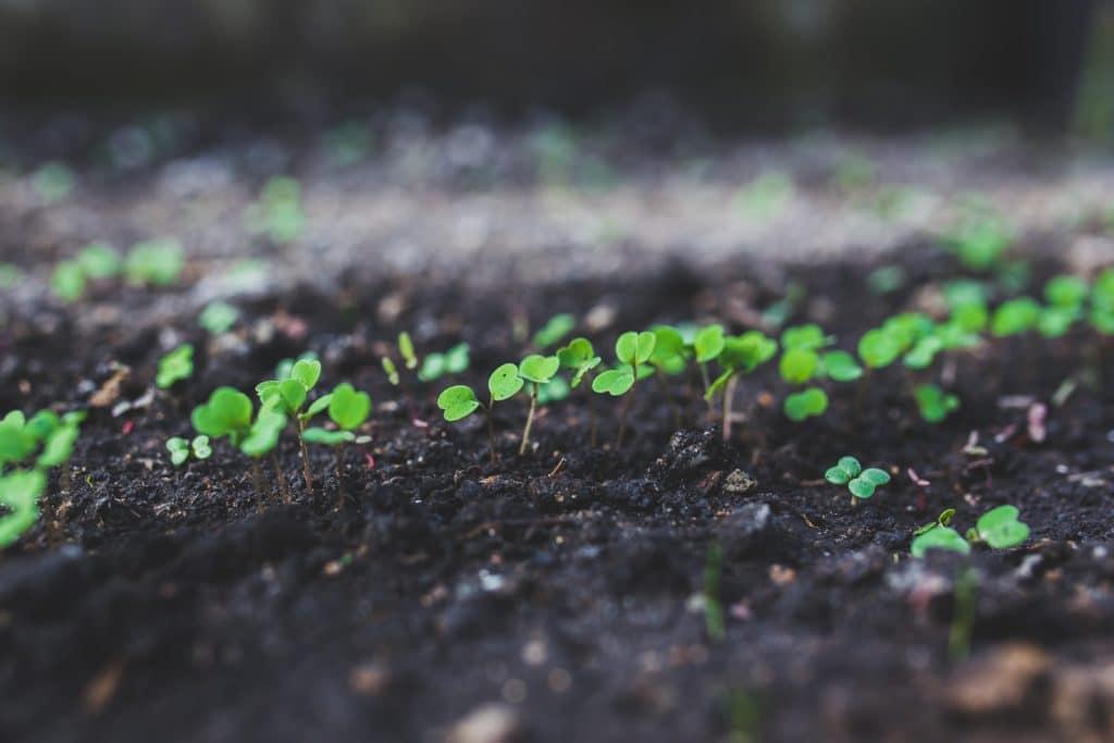 argula-botanic-grow-6414